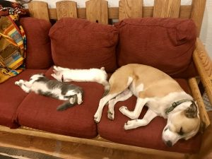 Massage Red Feather Lakes - Dude ranch summer 2019 adventure vacation all-inclusive pet friendly guest ranch