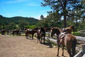 Dude Ranch Horses saddled for horseback ride