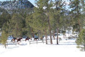 Winter Horseback Riding
