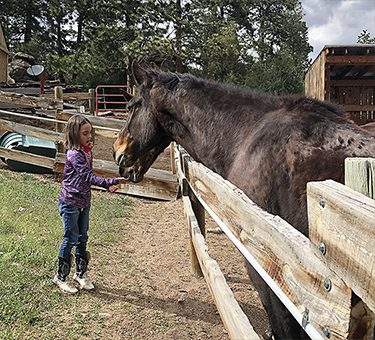 A little girl gives Montee the horse a treat.