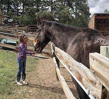 girl-feeding-horse
