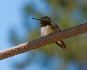 A Little bird told me... Bed & Breakfast Murder Mysteries in Red Feather Lakes