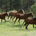 colorado dude ranch adventure family vacation affordable